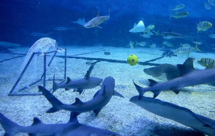 Estudio revela declive de población de tiburones de arrecife
