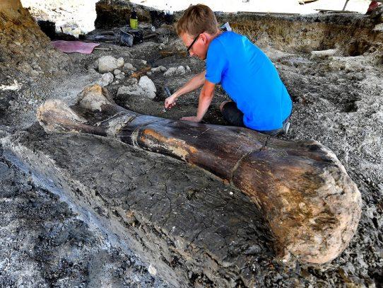 Hallazgo de colosal fósil de dinosaurio en Francia fascina a científicos