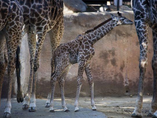 Los Ángeles prohíbe uso de animales salvajes y exóticos en fiestas y espectáculos