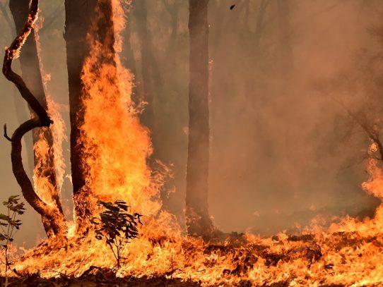 El calor aviva el fuego en Australia y declaran el estado de emergencia en el sureste