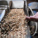 Chicago: trigo, maíz y soja bajan por mejora de pronósticos meteorológicos