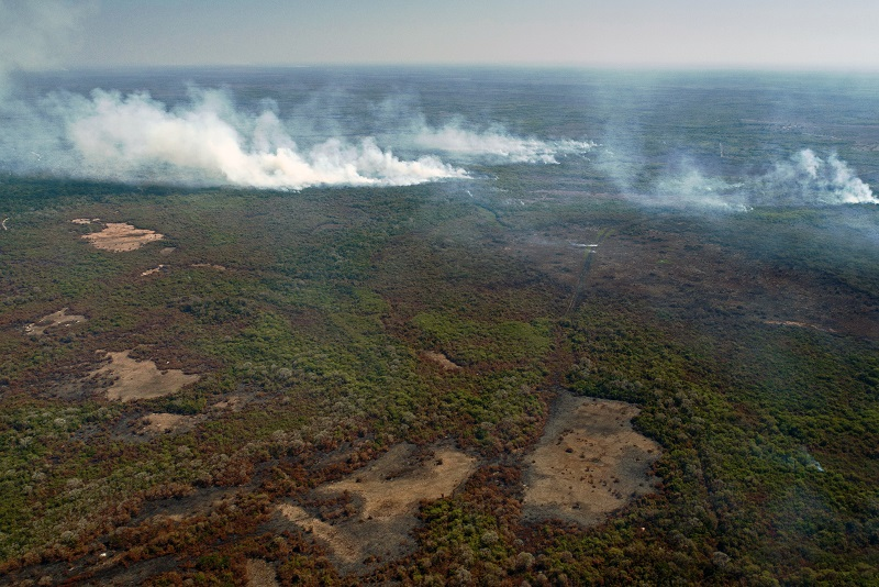 El Pantanal de Brasil, un paraíso verde devorado por las llamas