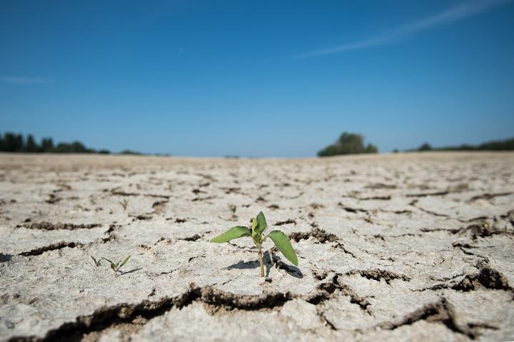 La sequía extrema de 2018-19 en Europa podría repetirse, según un estudio