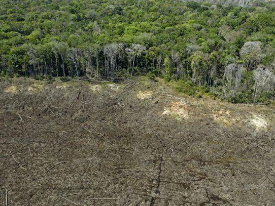"""Firmas de EE.UU. son """"cómplices"""" de deforestación y abusos en la Amazonía, según Amazon Watch"""