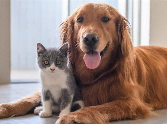 Atención de las mascotas en tiempos de cuarentena