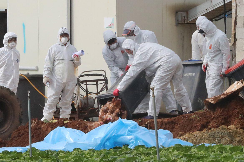 Nuevos brotes de gripe aviar en Alemania, Suiza y Austria