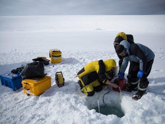 Un robot graba la vida bajo el hielo en la Antártida