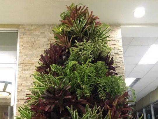 La Universidad de Panamá estrena árbol de Navidad ecológico