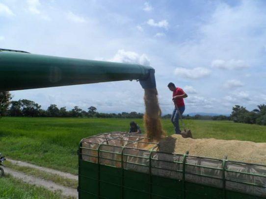 Productores marchan por incumplimiento del Gobierno en importación de arroz