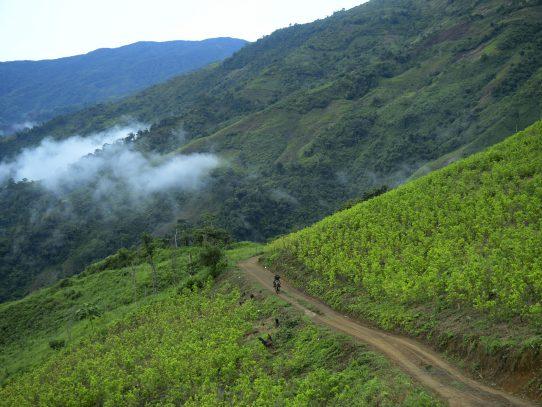 Colombia inició fumigación manual con glifosato contra cultivos de coca
