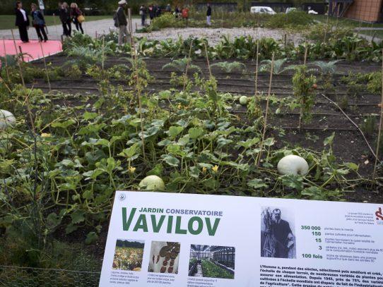 El instituto Vavilov, guardián mundial de las plantas perdidas