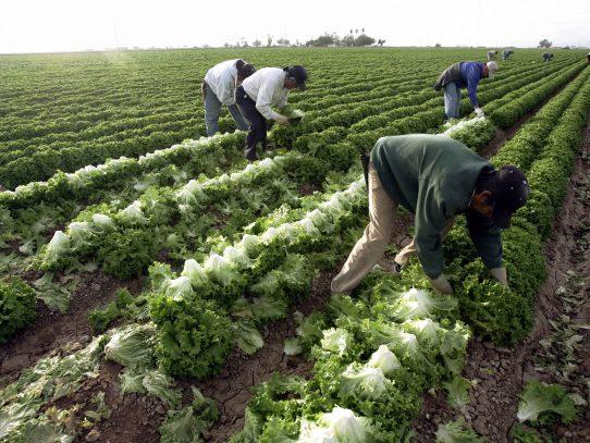 ¿Qué pasará con los campesinos mexicanos que hacen la cosecha en EEUU?