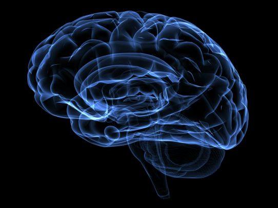 Desarrollan nuevas tecnologías de la imagen para explorar el cerebro