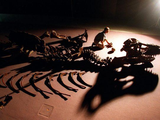 """Halladas 21 tipos de huellas de dinosaurio en el """"Jurassic Park"""" australiano"""
