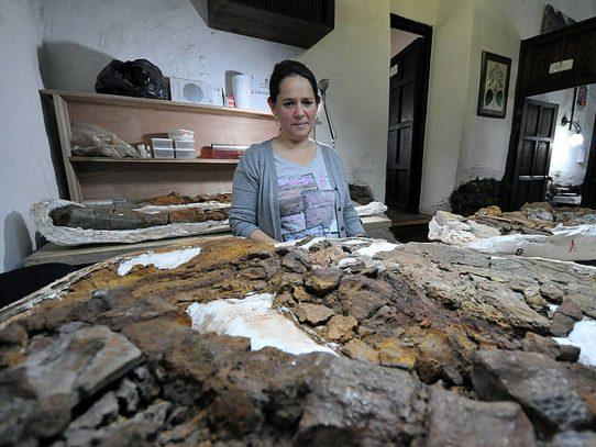 Hallan en Colombia fósil de reptil marino de 127 millones de años