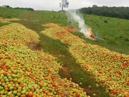 Productores de Tomate anuncian protesta para éste jueves