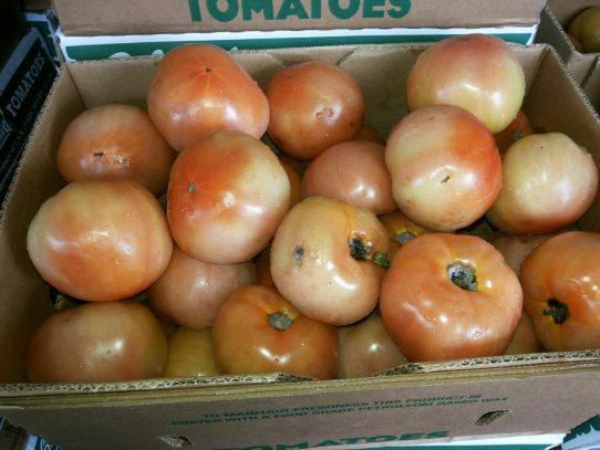 AUPSA niega ingreso de tomate con hongos