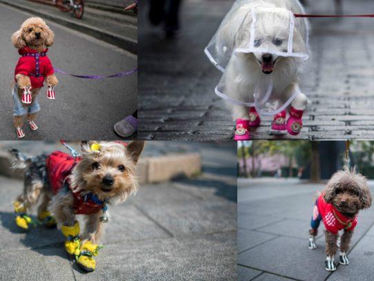China convierte en moda vestir a los perros