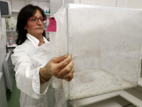 Investigadores unen esfuerzos para combatir el Aedes Aegypti