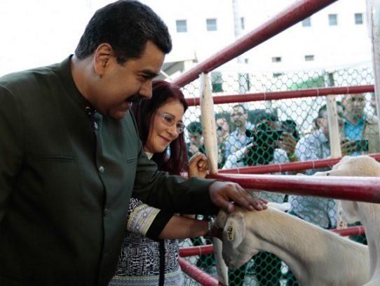 Nicolas Maduro ahora le habla a las vacas sobre la Asamblea Constituyente