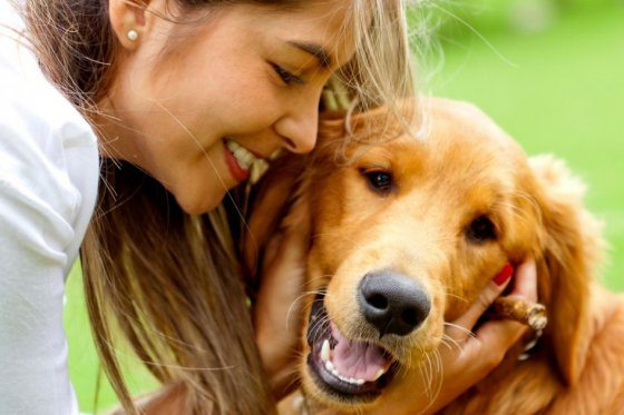 Los genes guían a los perros en su socialización con humanos