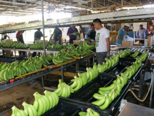 Trabajadores bananeros tendrán aumento salarial de 28% escalonado a 2024