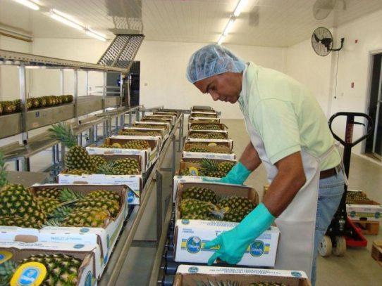 Inicia proceso de solicitud de exportación de productos a República Dominicana