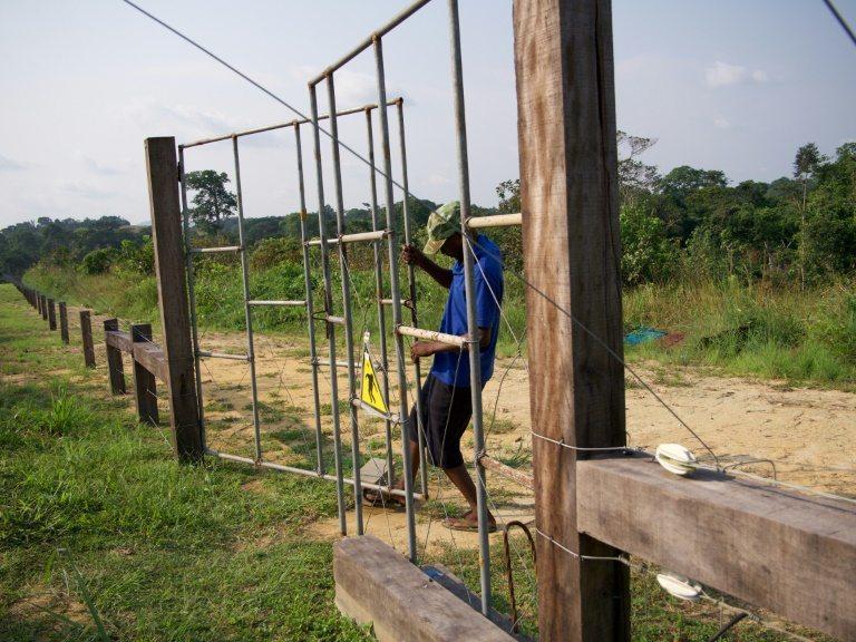 Reconciliación entre lugareños y elefantes en parque natural de Gabón