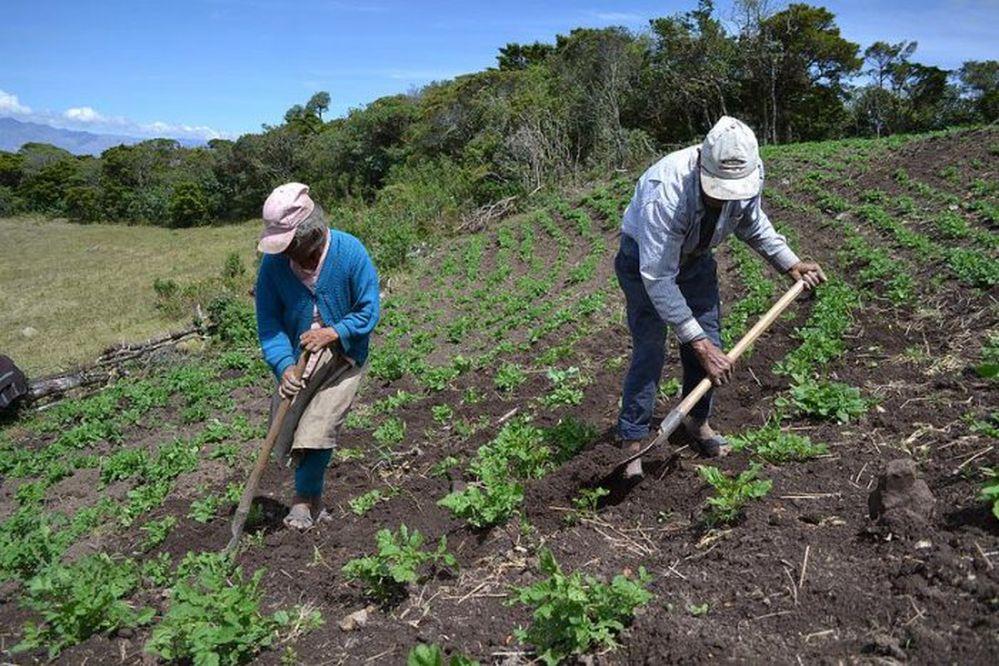 FAO: Urge invertir en el agro y las zonas rurales de Panamá