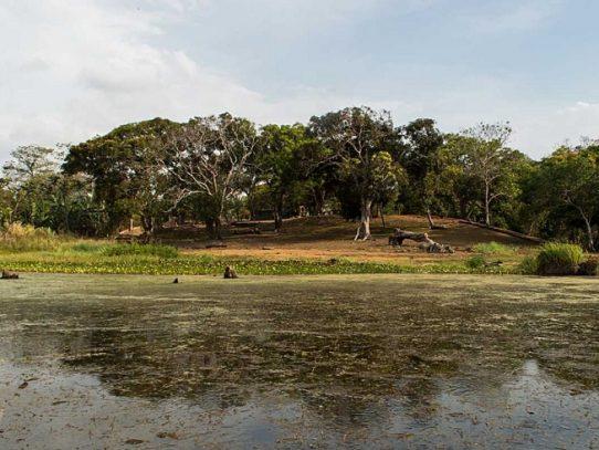 Ubican el cadáver de pescador tras ser atacado por cocodrilo en el Lago Gatún