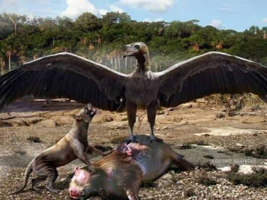 Hallan fósiles de aves carnívoras de 3,5 millones de años en costa de Argentina