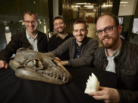 Antepasados de las ballenas eran depredadores con dientes muy afilados