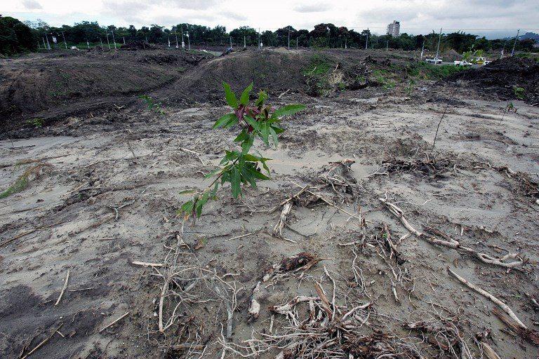 Comisión investigadora de tala en Darién ahora tendrá 90 días para rendir informe
