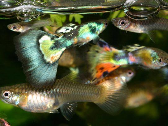 Estudios británicos afirman que los peces tienen personalidad