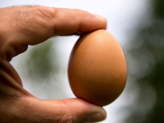Aproximadamente 170 huevos al año consumen los panameños