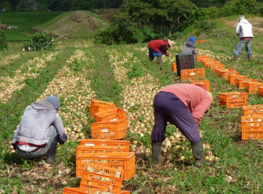 Productores de cebolla se reúnen con la Comisión de Asuntos Agropecuarios