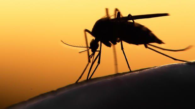 Cóctel de anticuerpos bloquea el virus del Zika en primates
