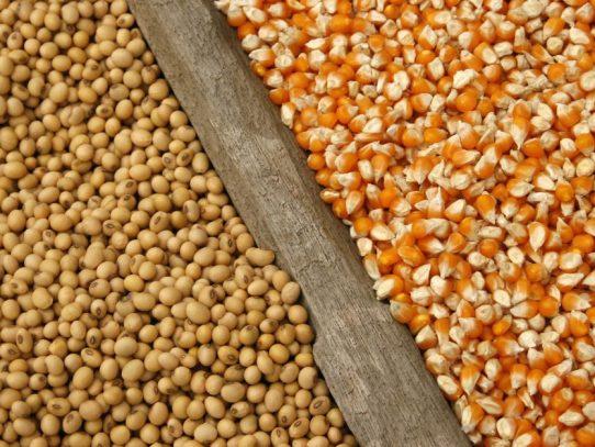 Maíz y soja bajan por el clima favorable en América del Sur