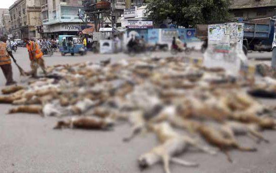 Envenenamiento de perros abandonados indigna a Líbano