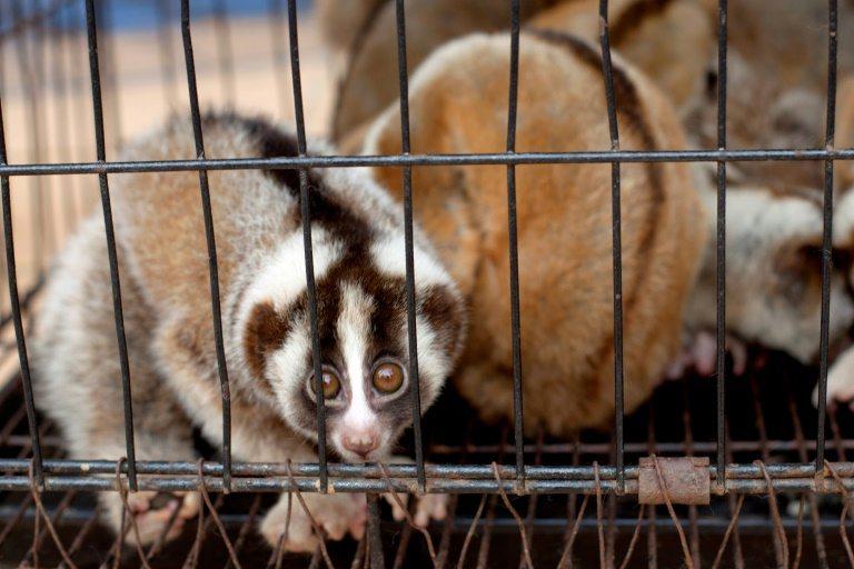 Nuevas tecnologías para luchar contra el tráfico de animales en Indonesia