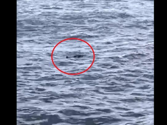 Encuentran cadáver flotando en la Bahía de Panamá
