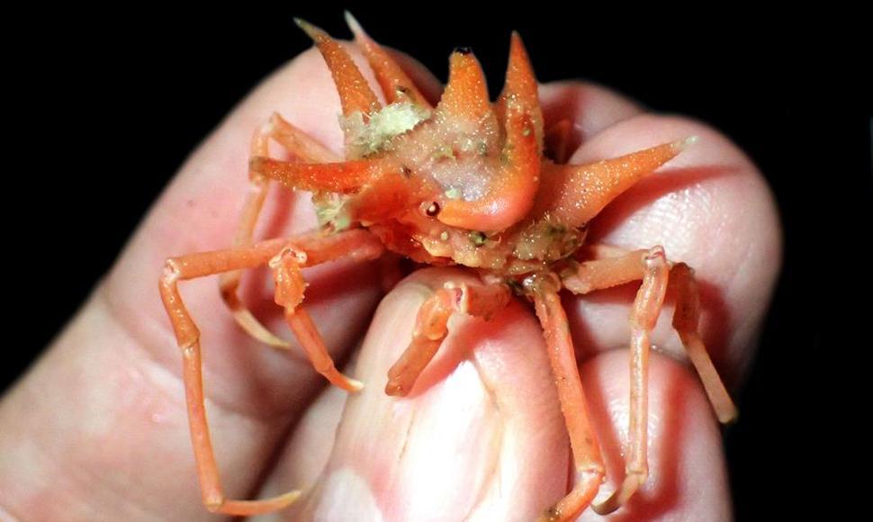 Descubren nuevas especies marinas exóticas en el Mar de Java