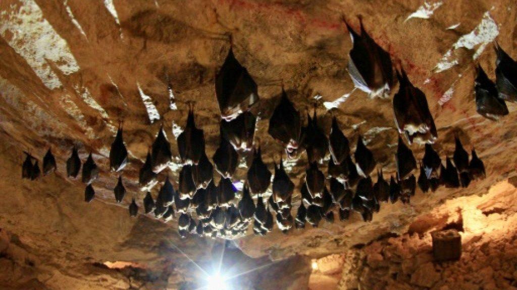 Descubren en China un nuevo coronavirus que proviene de murciélagos