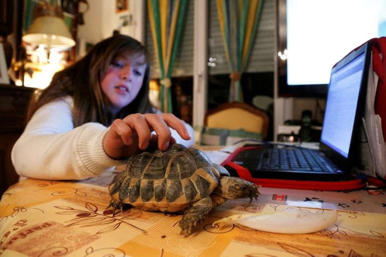Internet, una amenaza para los animales salvajes