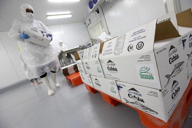 Panamá abre oficina Agrocomercial en Holanda