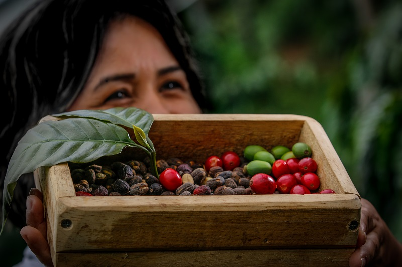 Circuito del Café, la apuesta del turismo en Chiriquí