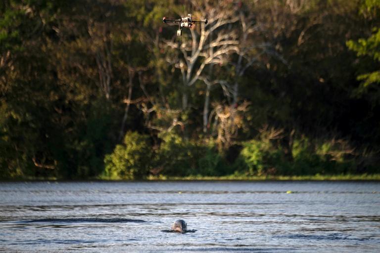 Los drones al servicio de la preservación de los delfines del Amazonas