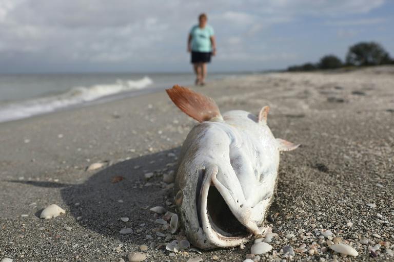"""Una """"marea roja"""" diezma la población acuática de la costa oeste de Florida"""