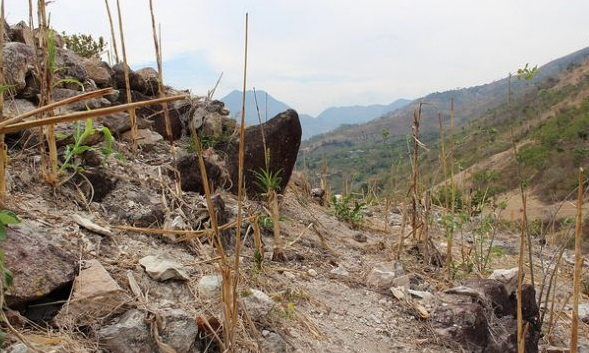 FAO en alerta,  por sequías en América Central