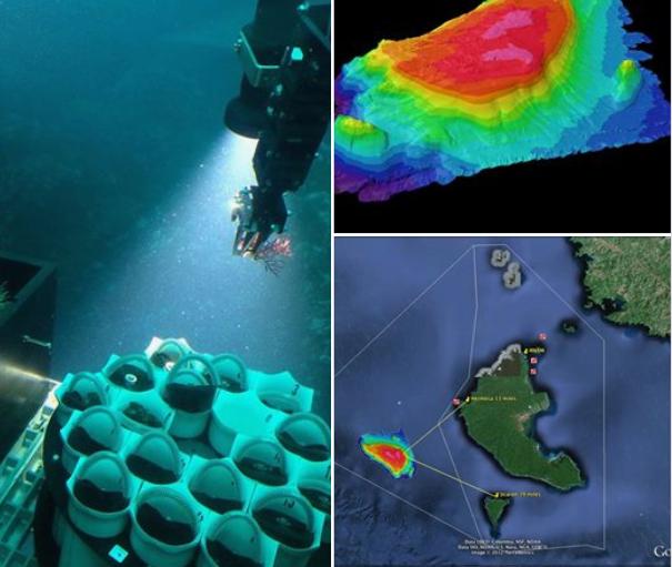 Se descubre nueva especie de coral blando en Coiba